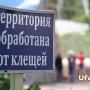 В Башкирии клещи покусали 19 человек