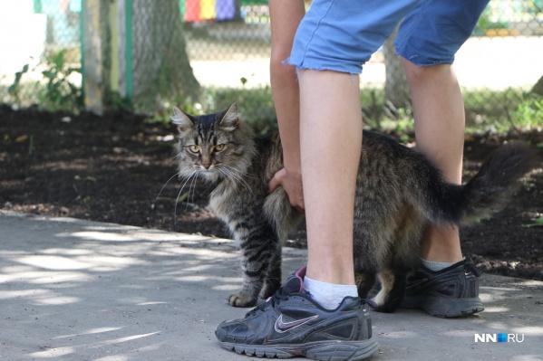 Нижегородцы прогоняют своих котов на работу