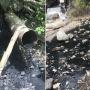 «Пятно стоит вдоль берега»: в Самаре сбросили мазут в ливневую канализацию