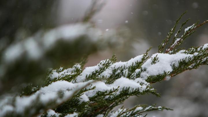 На Дону выпал первый снег