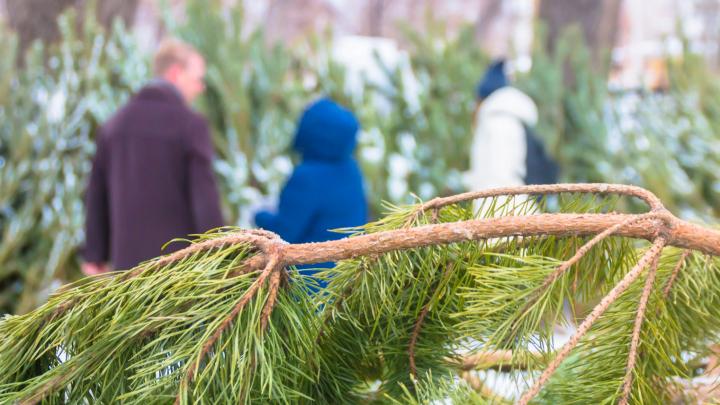 Где купить елку: все городские точки продаж хвойных деревьев нанесли на интерактивную карту