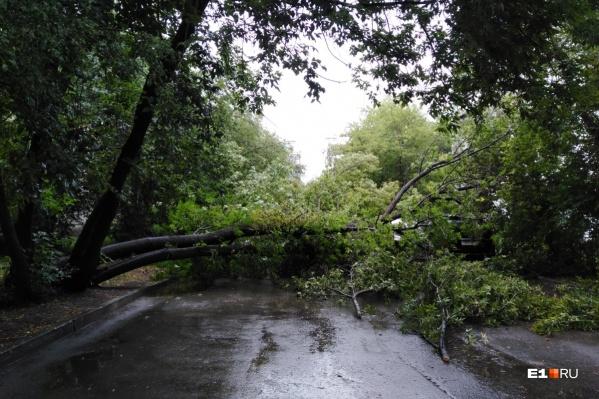 МЧС предупредило о сильном ветре до 23–25 метров в секунду