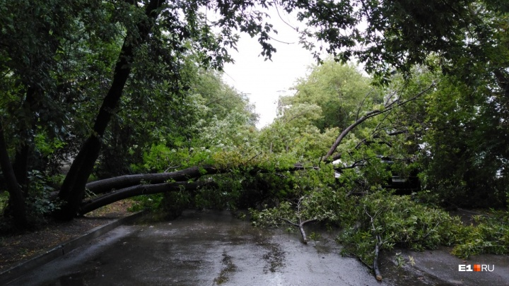 Ни дня без предупреждения: МЧС разослало сообщение о ветре и очень сильных дождях