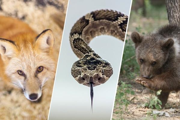 В число опасных животных входят не только звери, но и насекомые
