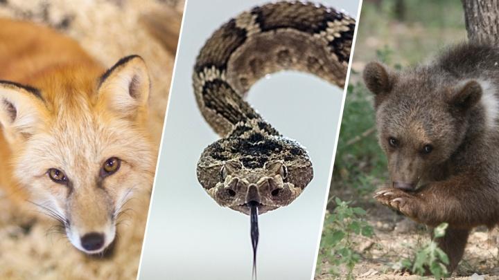 Топ-5 самых опасных животных омских лесов