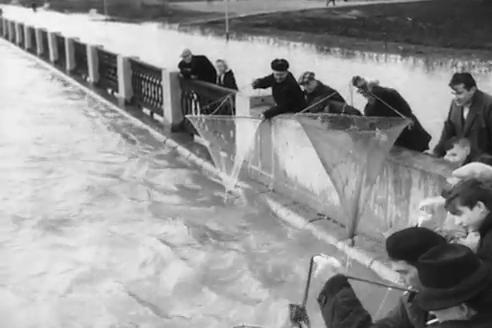 9 мая 1966 года в Новосибирске произошёл сильный потоп