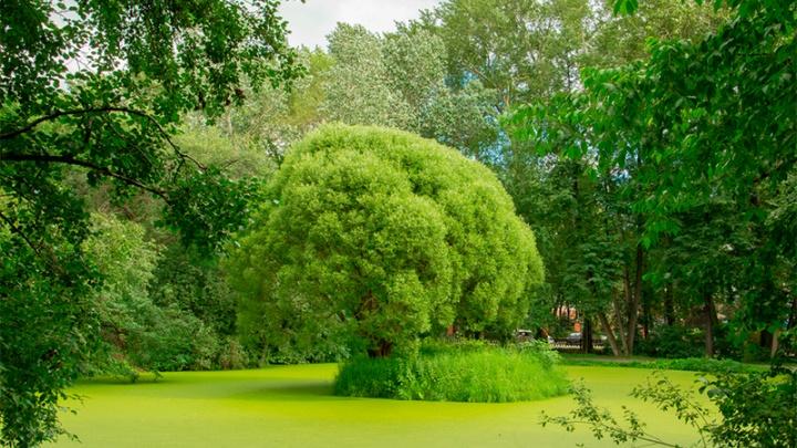 Два десятка скверов и парков Екатеринбурга получат статус особо охраняемых природных территорий