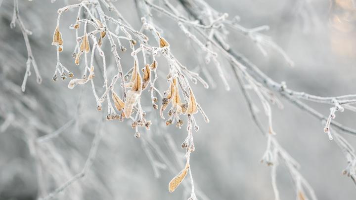 В среду в Красноярск нагрянут морозы до 45 градусов