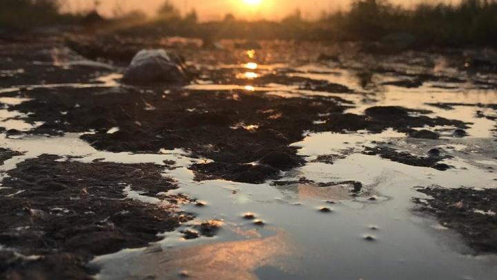 «В ней была птица, вся измазанная мазутом»: на окраине Екатеринбурга обнаружили лужу из химикатов
