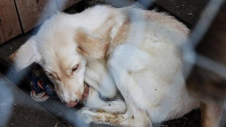 Владелец «концлагеря для собак» ушел от наказания