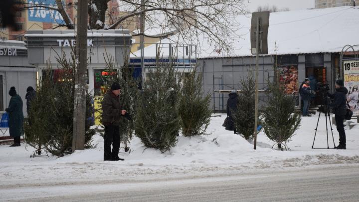 Чиновники разогнали тех, кто незаконно торговал новогодними ёлками