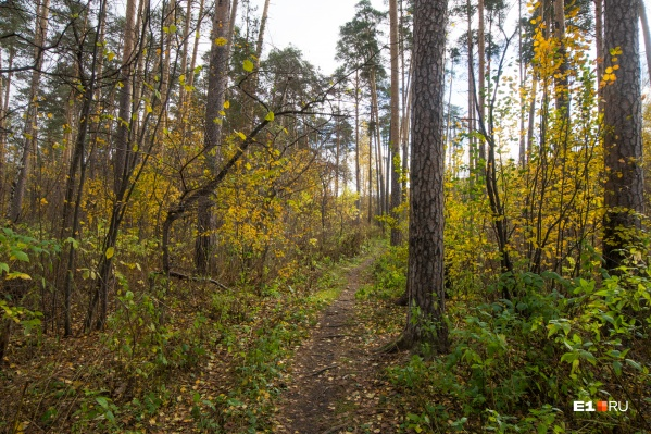 В лесопарке сделают разные маршруты