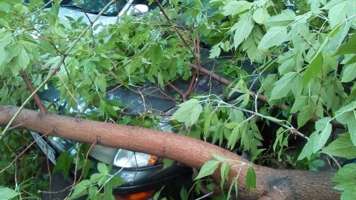 Сломанное ветром дерево придавило машину на Гоголя