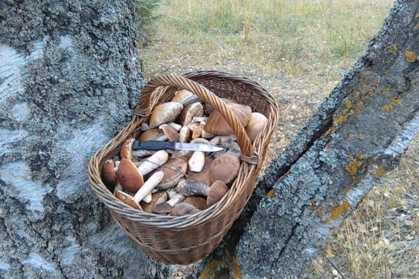 Наши предки 21 мая по погоде определяли, много ли в этом году будет грибов