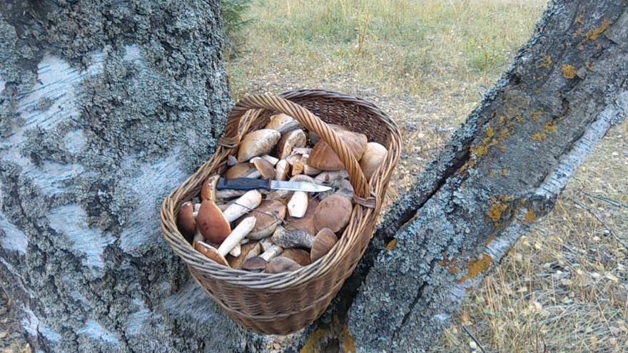 Примета верная - грибов будет много!
