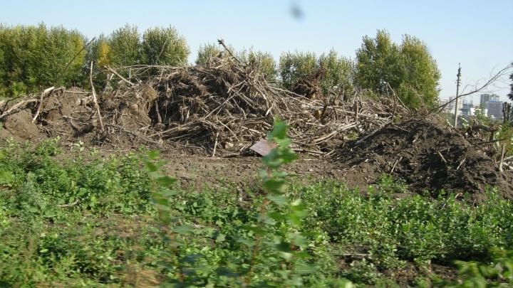 Щепки полетели: власти признали, что для стройки ЛДС на городском пляже вырубили кусты