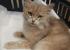 «Она как мешочек с переломанными костями»: в Екатеринбурге дети изувечили кошку, избив ее палками