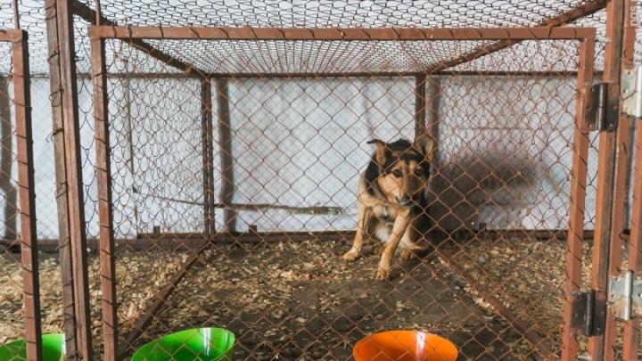 Изменены условия по обращению с выловленными на улицах бездомными щенками