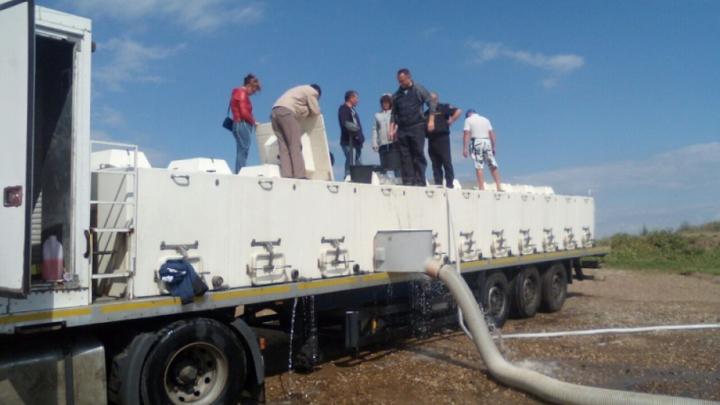 В водохранилище в Башкирии выпустили 46 тысяч мальков ценной рыбы