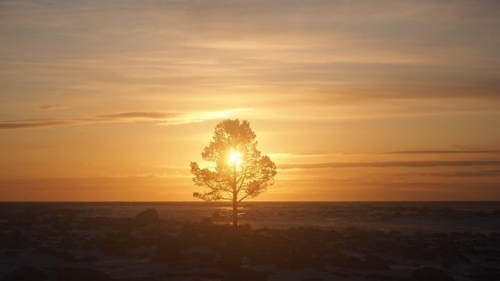 Солнце в морской пене и каменном лабиринте: смотрим 15 зимних, но теплых фото с Соловецких островов