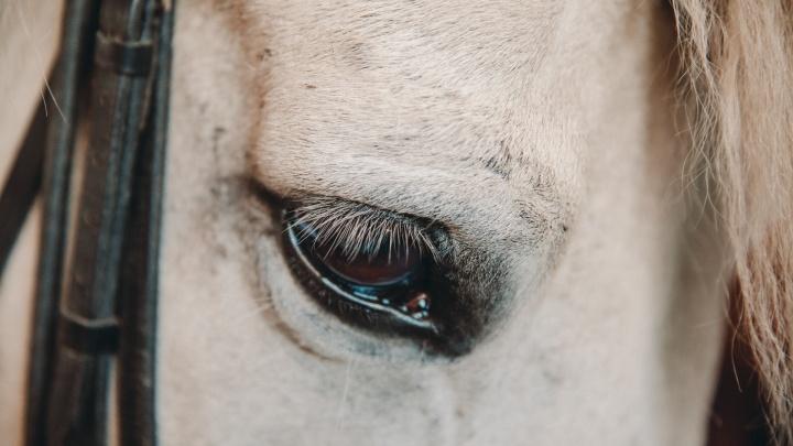 Суд заставил ялуторовского фермера убить своих лошадей
