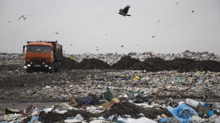 Москве надо избавиться от 6 млн тонн мусора. В какие регионы его будут свозить и кто этим займется