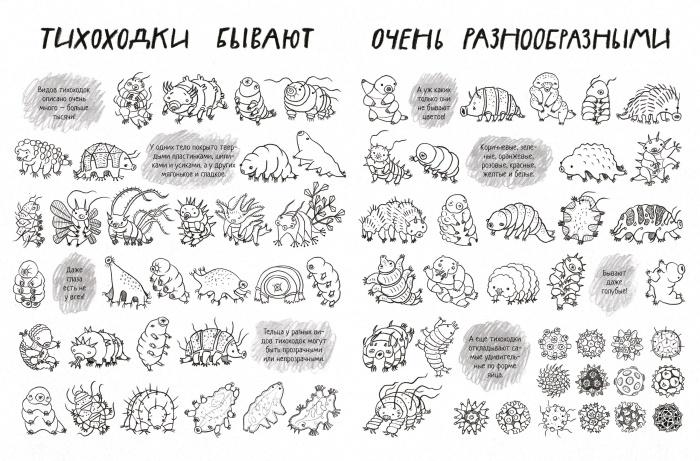 Тихоходки — микроскопические беспозвоночные, близкие к членистоногим