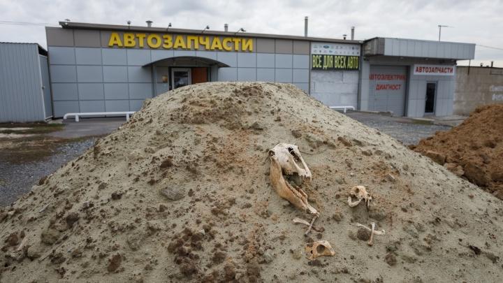 Назад в 90-е. В Волгограде чиновники хоронят малый бизнес, заваливая землей с неизвестными останками
