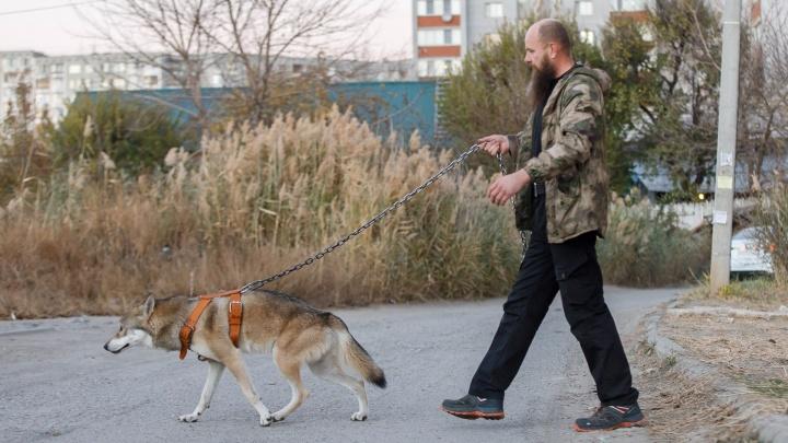«Дикими называют даже попугаев»: хозяин волка из Волгограда рассказал о новом законе про животных