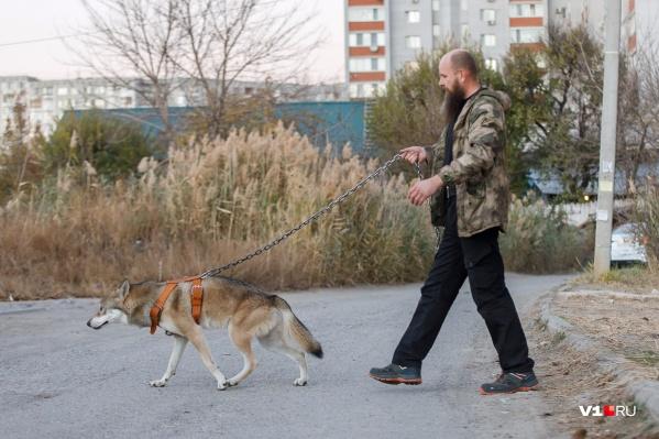 Для своего волка Иван Лебедев нашел в законе отдельный пункт