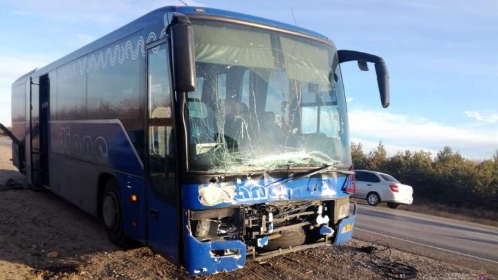На московской трассе под Волгоградом лось«подрезал» рейсовый автобус