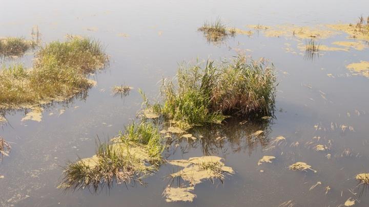 Содержат нитриты и механические примеси: четыре зауральских водоема сильно загрязнены