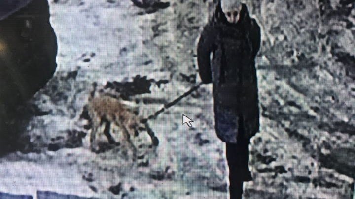 В Ярославле женщина рано утром подбросила чужим людям своего щенка