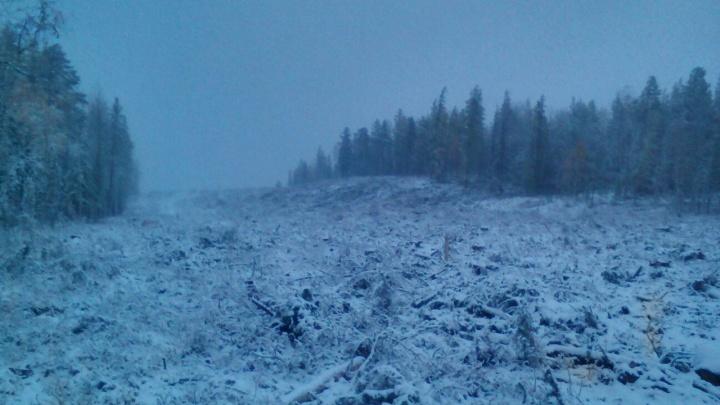 Север и юг края засыпало снегом