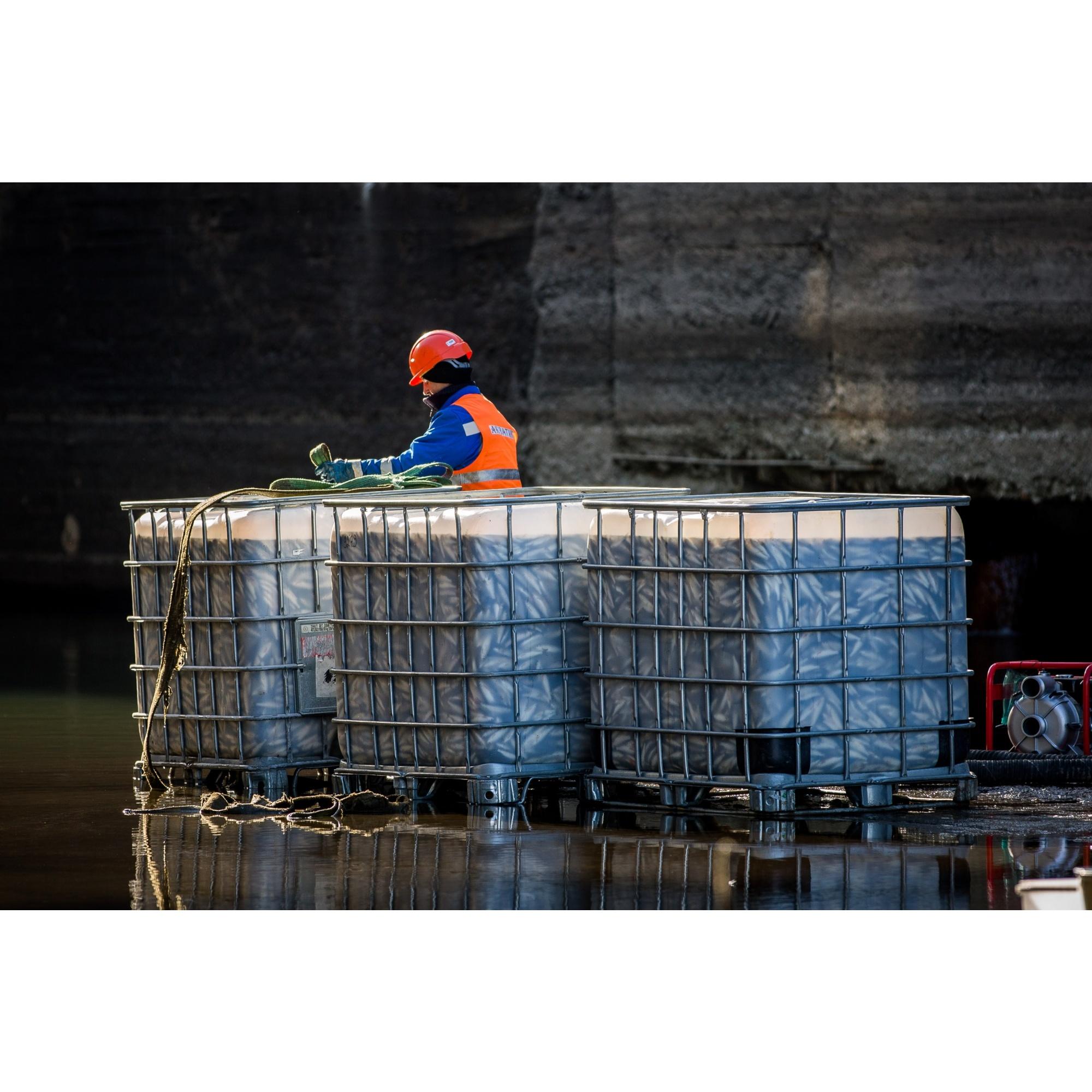 После переброски рыбы в Обь начнутся строительные работы по укреплению стен канала