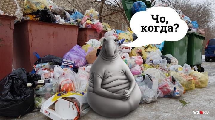 «Привезем им свалки — тогда уберут»: волгоградцы отнесут неубранный мусор к офису регоператора