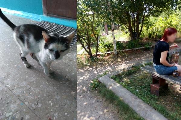 Котик выжил, но ему грозит опасность