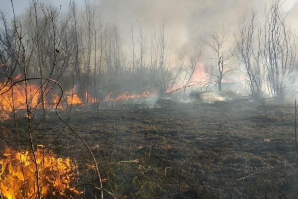 Брошенный окурок может стать причиной ландшафтного пожара
