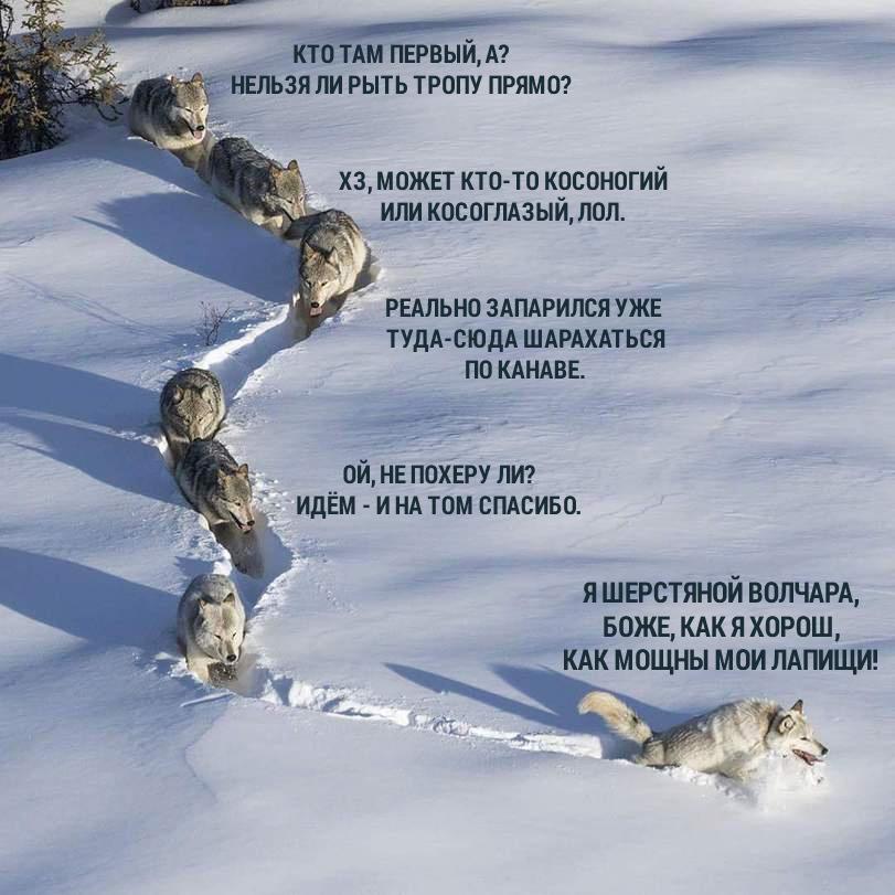 Псы в сугробах: как собаки на Урале переживают морозы и снегопад
