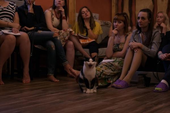 Новосибирцы смогут смотреть кино в компании с котами всю осень и зиму