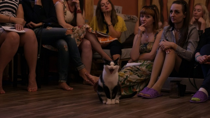 Новосибирцев позвали смотреть кино в компании дюжины котов