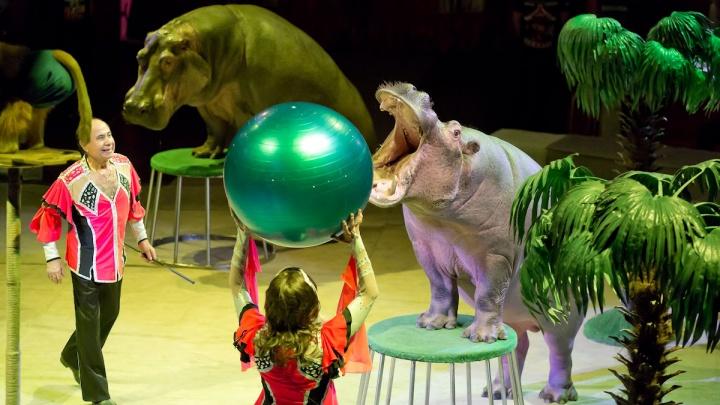 Танцы африканских бегемотов и трюки пушистых лаек: челябинцам показали новое цирковое шоу