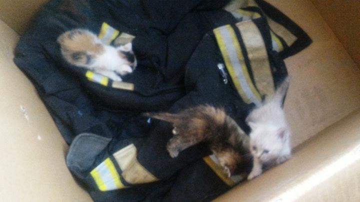 Пожарный из Новосибирска рассказал, как спас трёх котят и нашёл им новых хозяев