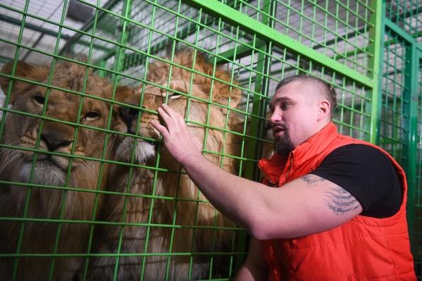 Дрессировщик Артем Лазаревский всех своих львов называет детьми