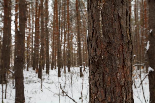 Мужчина сильно замерз в лесу, пока ждал подмогу