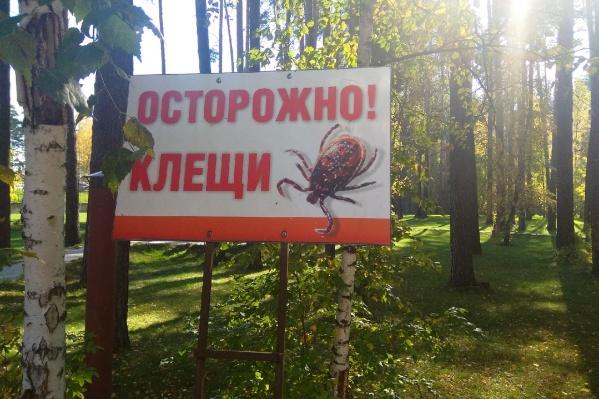 В Новосибирске снова начался клещевой сезон — врачи просят быть аккуратными весной и летом, а также делать прививки