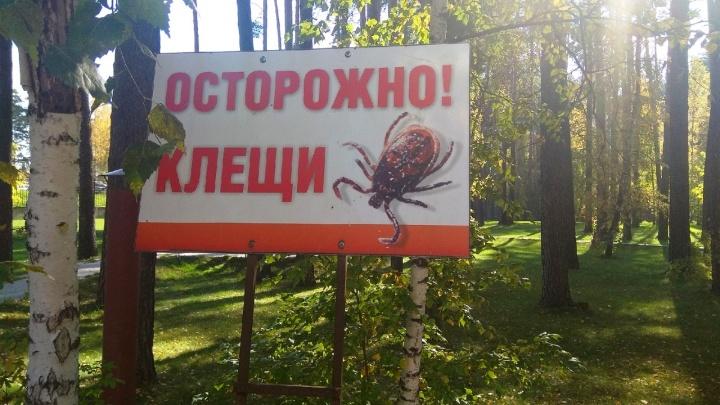 Клещи оттаяли после оттепели и атаковали новосибирцев
