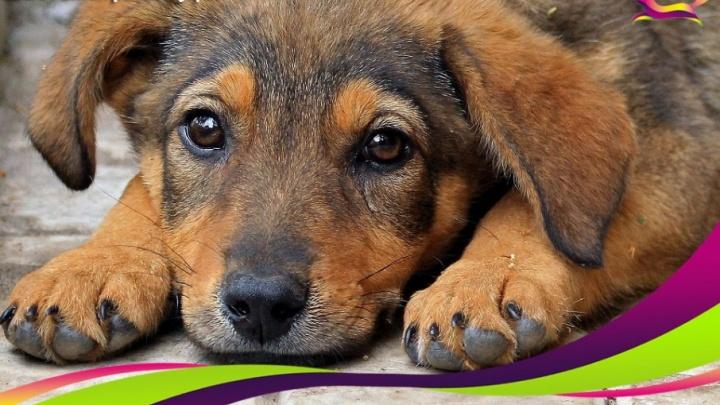 Уфимцев просят помочь бездомным животным