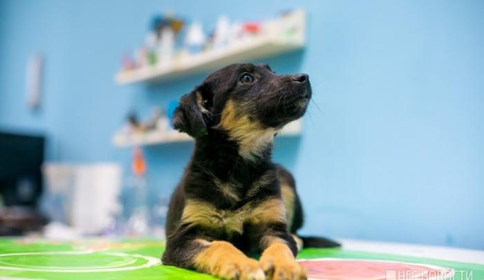 Домашние коты и собаки остались без прививок от бешенства из-за дефицита вакцины в клиниках