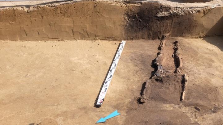 Черепки и 22 могилы: учёные целиком выкопали древнее поселение недалеко от Большевистской